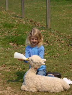 photo stolen from www.alpacafarmgirl.com
