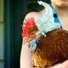 Ella an dthe chicken hats