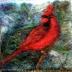 Elkin_cardinal